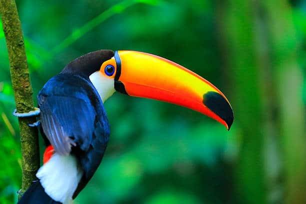 animaux oiseaux rares cascades iguazu argentine bresil parc