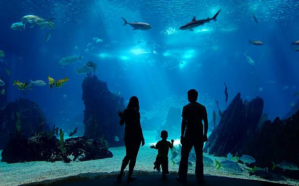 aquarium-la-rochelle-week-end