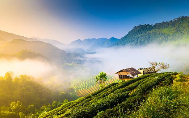 periode partir vacances thailande climat temperature
