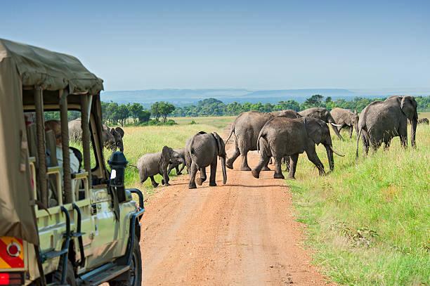 safari au kenya reserves naturelles