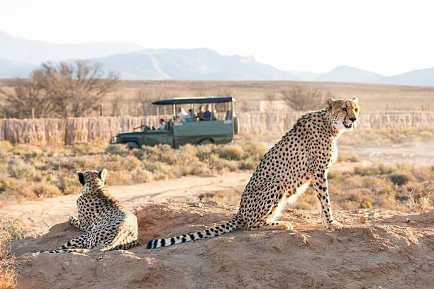 organiser safari afrique excursion reserve naturelle prix