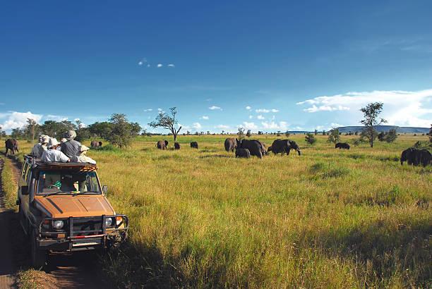 organiser safari en afrique sortie parc national