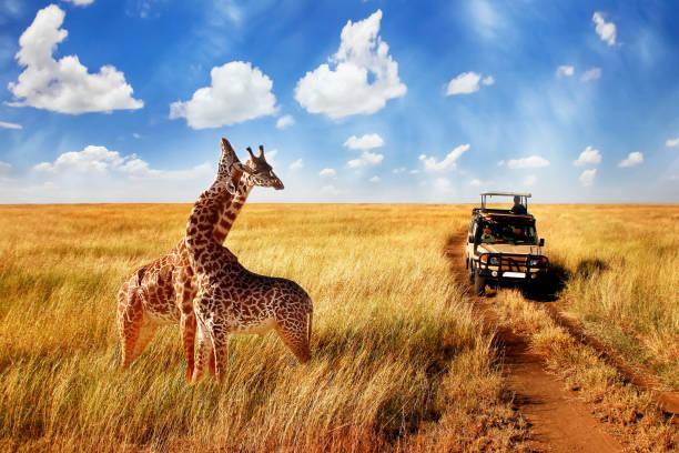 organiser un safari en afrique prix comment où