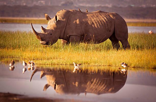 safari organisation afrique agence hebergement tarif